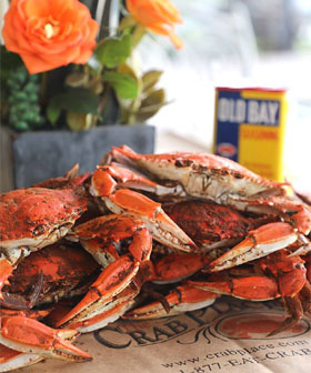 Maryland Jumbo Crabs Guaranteed Fresh The Crab Place