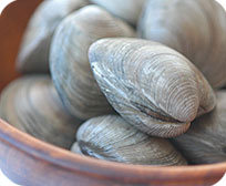 Dozen Middleneck Clams in their Shell