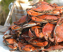 One Dozen Jumbo Steamed Maryland Blue Crabs ( Male )